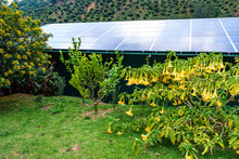 Sunny Tropical Garden With Yellow Flowering Bushes And A Building With A Roof Covered In Solar Panels, Reflection Of Blue Sky And White Clouds In Solar Panels