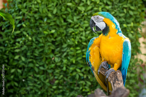 Foto op Aluminium Papegaai Parrot, lovely bird, animal and pet in the garden