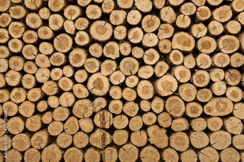 Wall Murals Firewood texture Log wood pile