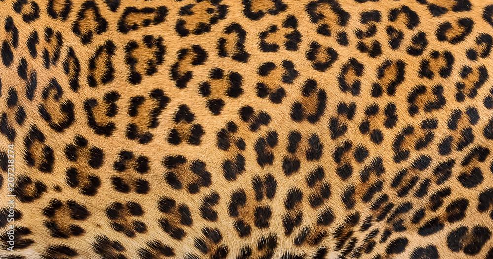 Photo  Leopard fur background.