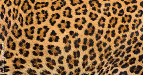 Foto op Canvas Luipaard Leopard fur background.