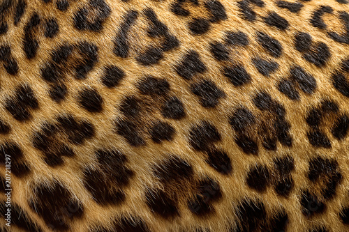 Deurstickers Luipaard Leopard fur background.