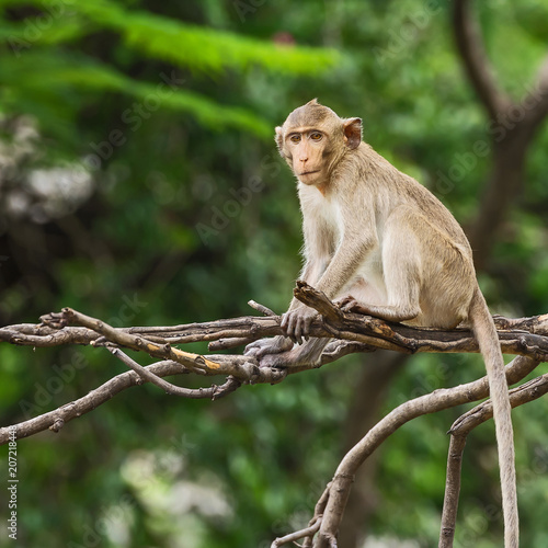 Foto op Plexiglas Aap Close up monkey.