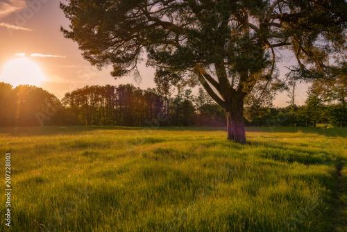 Fototapety, obrazy: Sonnenuntergang auf einer Wiese