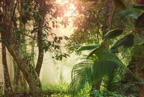 Jungle in Costa Rica Canvas Print