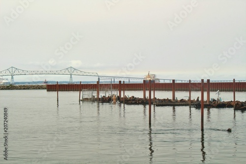 Fishing harbor with sea lions resting on the docks in Astoria, Oregon Poster
