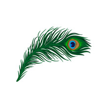 Long Emerald-green Feather Of Peacock. Plumage Of Beautiful Wild Bird. Detailed Flat Vector Element For Poster, Book Or Print