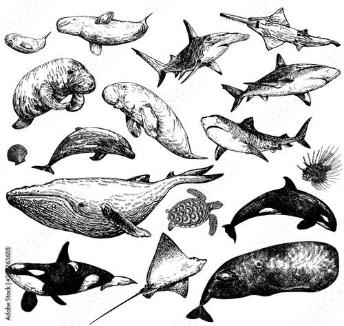 Cuadros en Lienzo Set of hand drawn sketch style marine animals isolated on white background