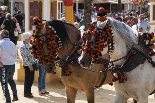 Cabeza de caballos en la feria de jerez