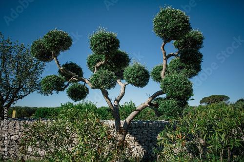 Fotobehang Olijfboom Green Tree in Italy Trullis city alberobello apulia