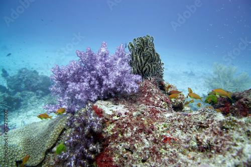 Spoed Foto op Canvas Onder water Coral reef