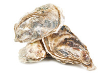 Delicious Raw Oysters On White