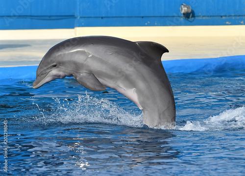Fotobehang Dolfijn delfin