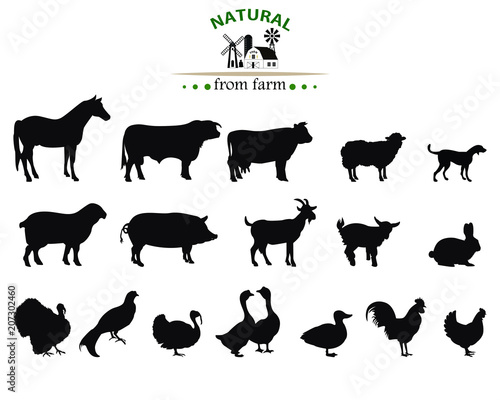 Stampa su Tela Vector farm animals silhouettes isolated on white.