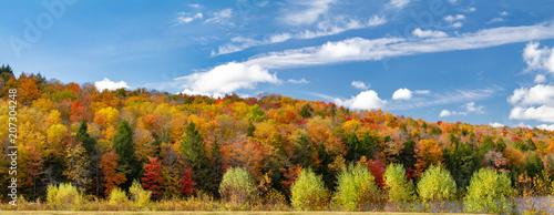 Obraz na płótnie Colorful fall forest foliage in panoramic New England landscape scene