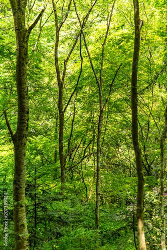 Fototapeten Wald 新緑