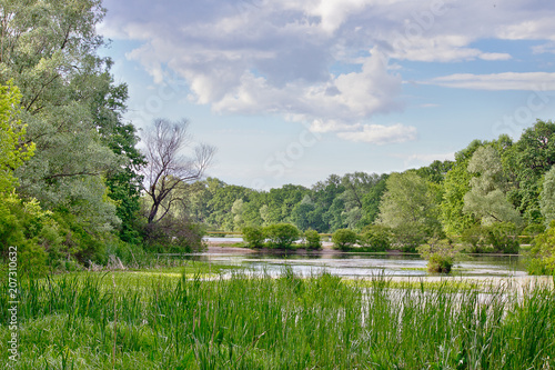 Fotobehang Bleke violet Summer landscape with a river and trees on the shore