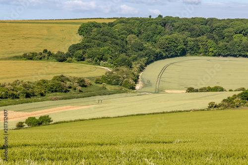 Foto op Canvas Pistache A South Downs summer landscape of crops growing in fields