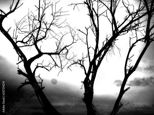 Czarno-białe zdjęcia, drzewa i gałęzie