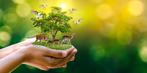 Fototapeta Eko Concept Nature reserve conserve Wildlife reserve tiger Deer Global warming Food Loaf Ecology Human hands protecting the wild and wild animals tigers deer, trees in the hands green background Sun light