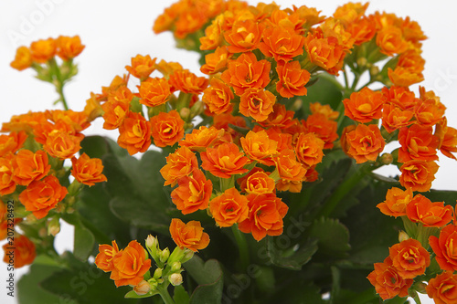 Fotobehang Bloemen turuncu çiçek