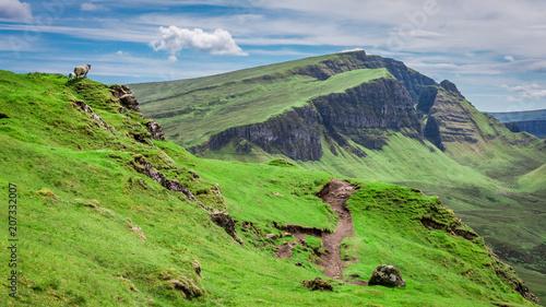 Green hills and sheeps in Quiraing, Scotland, United Kingdom Canvas Print