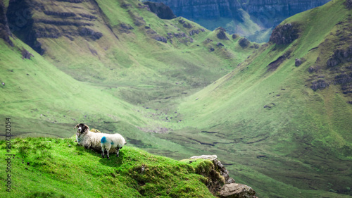 Photo Sheeps on green hills in Quiraing, Isle of Skye, Scotland