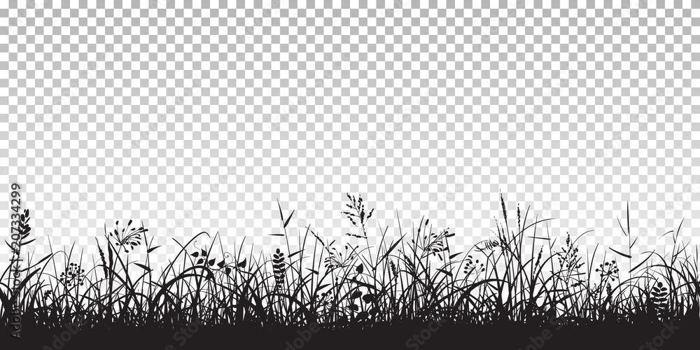 Fototapety, obrazy: Black silhouettes of grass
