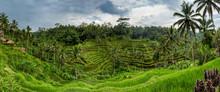 Panoramic View Of Tegallalang Rice Terrace - Ubud - Bali - Indonesia
