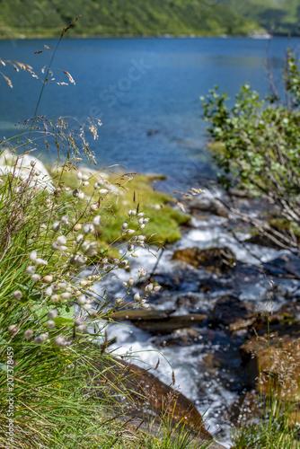 Poster Bergen Bach fließt in den See