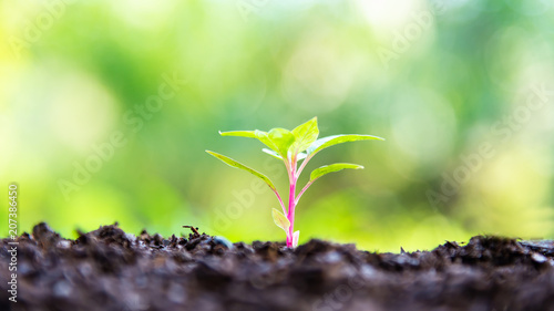 Garden Poster Plant Small tree in the morning light growing out from soil. Ecology Concept