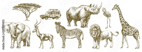 African safari animal. Hand drawn set. Wallpaper Mural