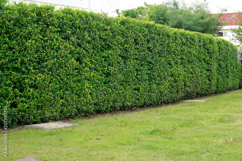 Wall Tree Backyard Bush Fence Buy This Stock Photo And Explore