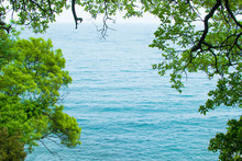 The Sea Behind The Branches Of Trees