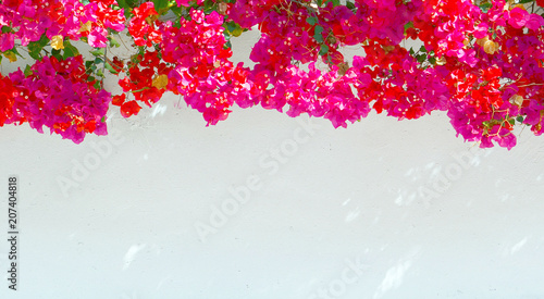 Fotomural Bougainvillea flowers on a white wall background