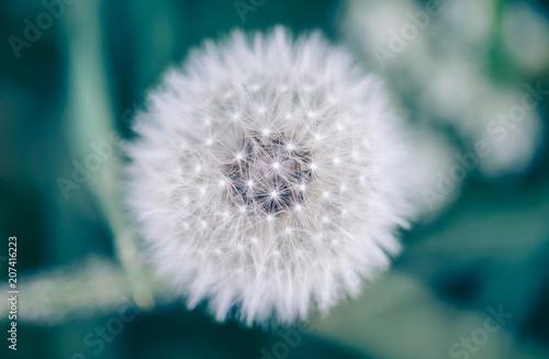 Fototapety, obrazy: flower seedling