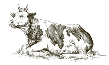 Lying Cow. Hand Drawn Vector Illustration.