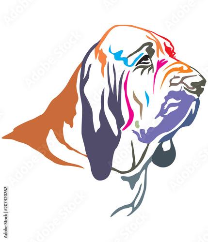 Colorful decorative portrait of Bloodhound vector illustration Canvas Print