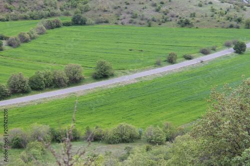 Foto op Plexiglas Olijf field landscape