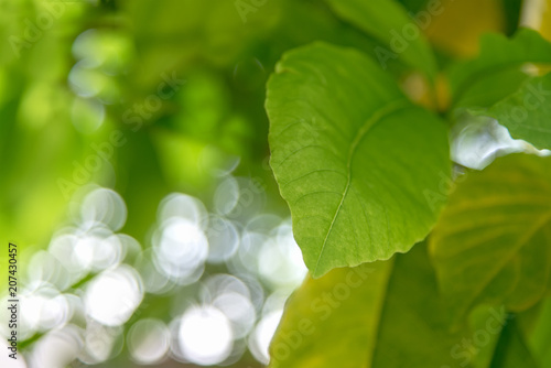 Fotografie, Obraz  Fresh plant leaves shooting, select focus and bokeh background