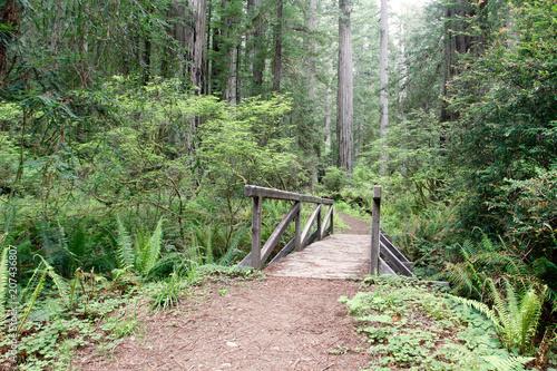 Foto op Canvas Weg in bos Wooden footbridge, South Fork Trail, Prairie Creek Redwoods State Park, California, USA