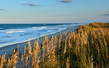 Sea Oats And Dunes At Cape Hatteras National Seashore Near Pea Island.