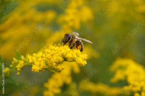 In de dag Bee Biene