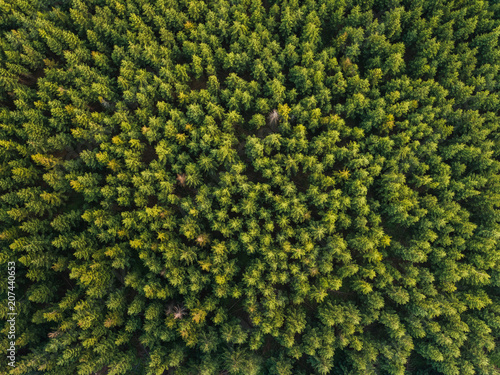 Fototapeten Wald Forest / aerial view