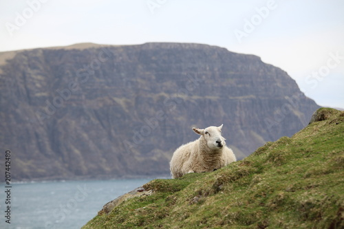 Photo mouton allongé devant une falaise abrupte