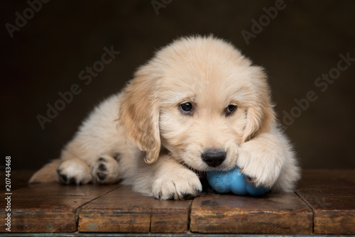 Golden Retriever Puppy Chewing On A Blue Toy Ball Eyes Looking Up