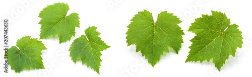 Vászonkép  collection of green grape leaves isolated on white background