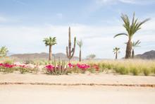 Desert Landscape With Cactus A...