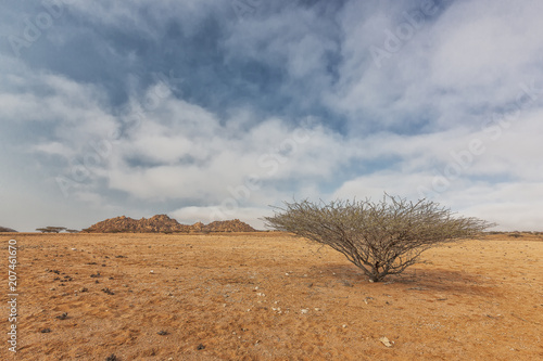 Valokuva Dry tree known as espinheira in iona natural park. Angola Cunene.
