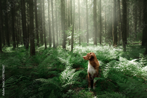 Fényképezés  dog in the forest sits in a fern